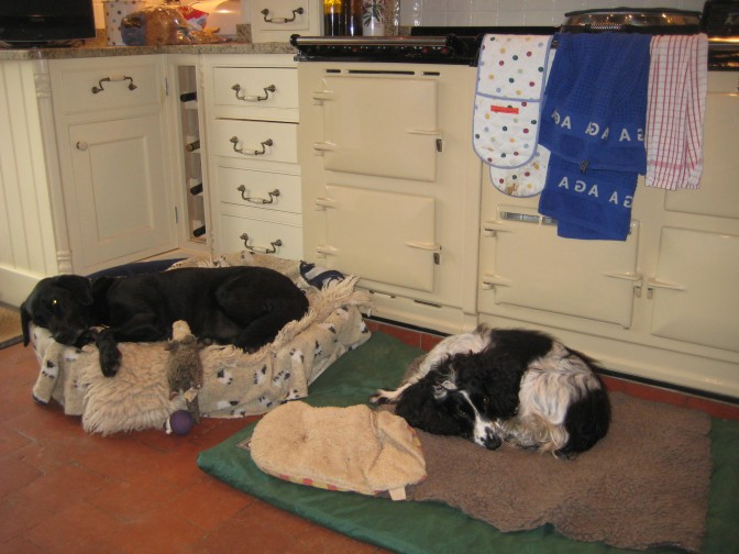 Dogs drying by the Aga